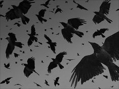 """Black Rain"" -- from Unbreakable #unbreakable #thelegionseries #kamigarcia #YAbooks #supernatural #paranormal"