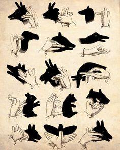 animals, shadow puppet, vintage illustrations, hands, hand puppets, hand shadows, bedtime, shadow art, kid