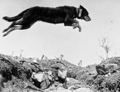 The Daily Glean: The Great War: the greatest photographs