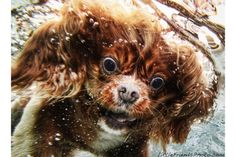 puppies underwater