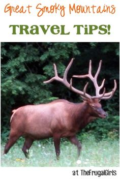 19 Fun Things to See and Do around the Great Smoky Mountains! ~ from TheFrugalGirls.com - you'll love these fun travel tips to the gorgeous Smoky Mountain National Park! #thefrugalgirls