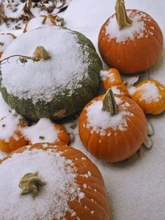 snow covered pumpkins