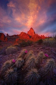 Desert Garden, Arizona's Kofa Mountains DOWN AROUND YUMA