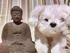 Buddha's and puppy dogs... What more could one want?! ;)  pict.com/p/19