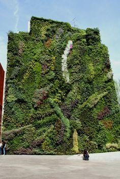 Patrick Blanc's vertical gardens in Madrid.