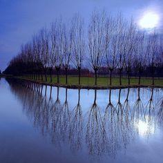lovely trees...