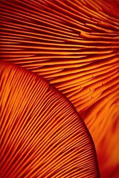 Mushrooms. credit to Giovanni Accolti