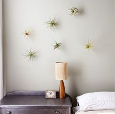 air plants on the wall!