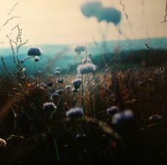 Waking in fields of dreams...