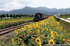 Seomjingang Train Village