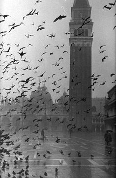 Pigeons in Piazza San Marco on rainy day with St. Mark's Basilica in the background. Photo by Dmitri Kessel. 1952