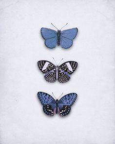drugeliai//  Of my uncle Frankie