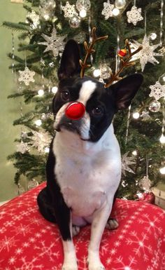 Pearl's 2013 Christmas picture