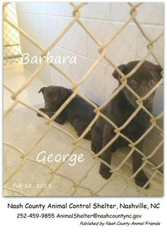 URGENT!!  Shelter is full...need rescue by tomorrow!!
