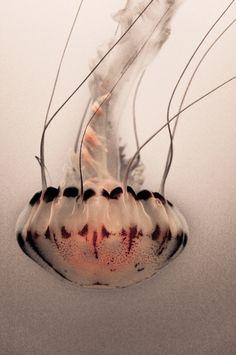 Monterey Bay Aquarium, by ablogvoyage