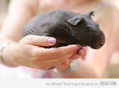 Newborn hippo