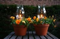 Neat Idea: Just add a hurricane vase and candle to potted plants to make cute lights! garden ideas, potted plants, centerpiec, candle holders, candles, flower pots, outdoor parties, planter, patio tables