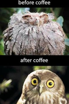 #Coffee before and after lol #truth
