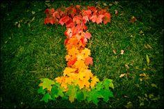 Fall at the University of Illinois, Urbana-Champaign