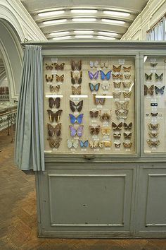 Butterflies - Zoological museum