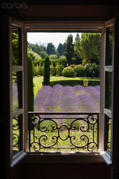 View of lavender...provence