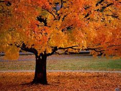 Google Image Result for http://www.free-wallpapers-free.com/wallpapers/preview/we/welcome-autumn-1.jpg