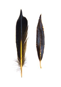 flicker feather and willow leaf (mary jo hoffman)