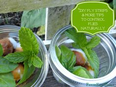 natural fly repellent- great for picnic tables  vanilla, mint and basil, rosemary, bay leaves,  eucalyptus