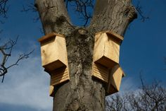 Bat boxes mounted in a tree