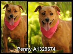 **EMERGENCY** ~ SWEET 4 YEARS OLD FEMALE, BROWN & BLACK GERMAN SHEPHERD DOG!! PENNY - ID#A1329674 — HARBOR SHELTER - SAN PEDRO, CA (L.A. AREA)  The shelter thinks I am about 4 years old. I weigh approximately 57 pounds. I have been at the shelter since Jul 08, 2013.   http://www.petharbor.com/pet.asp?uaid=LACT1.A1329674  https://www.facebook.com/photo.php?fbid=339715386162368=a.233089930158248.61144.162131600587415=1=nf
