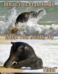Elephant Funny