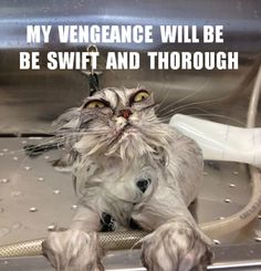 My Vengeance will be swift... | High Octane Humor