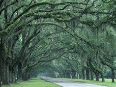 plantations in Savannah