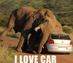 Oh Elephants
