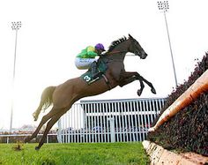 Oh for heaven's sake - I don't even like horse racing (horses themselves are ok). But I love this picture and I love Kauto Star.