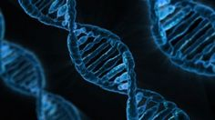 What Else Can I Do With My DNA Test Results? - The Genetic Genealogist