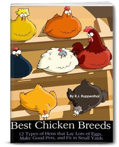 FREE ebook: Best Chicken Breeds: 12 Types of Hens that Lay Lots of Eggs, Make Good Pets, and Fit in Small Yards (36-page Booklet)