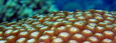 About the Reef - What is Australia's Great Barrier Reef