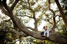 In a beautiful old tree