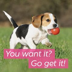 inspir, ador puppi, motiv, live