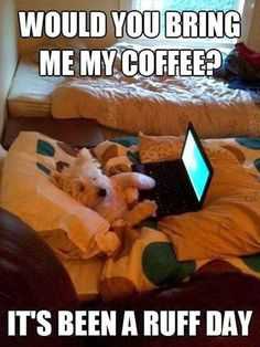 funny animals, funny dogs, funny animal pictures, animal funnies, funny cats, pet, coffee, funny dog pictures, dog funnies