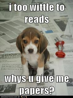Way too cute. funny animals, puppies, dogs, funny animal pictures, pet, paper, funni, puppy pictures, beagles