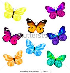 vector stock: Set Butterfly, aislados en fondo blanco, ilustración vectorial
