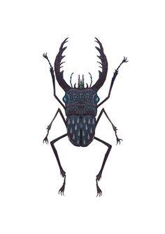 Stag beetle by Vladimir Stankovic