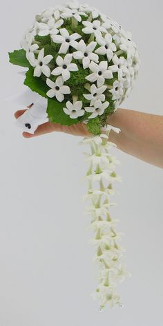 Classic Stephanotis, also known as Madagascar Jasmine, are small, star shaped and sweet-scented white flowers used commonly for Weddings Flowers.