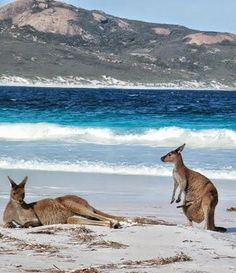 Lucky Bay, Australia – This beach is inside a national park and is one of the few beaches kangaroos go to.