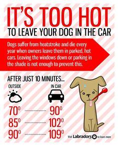 Labradors.com - Don't Let A Hot Car Kill Your Lab! #labrador #dog #health