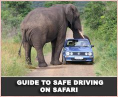 Arrive Alive: Road safety information from the South African Department of Transport, including advice on driver and vehicle safety...and what to do when elephants approach.