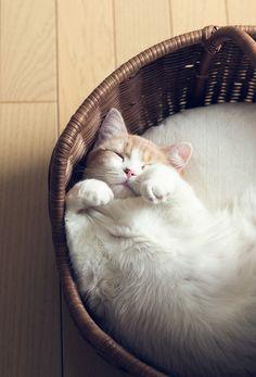 Furbaby naptime in Basket <3 <3