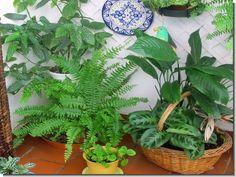 Plantas y flores: Cada una en su sitio